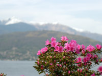 Италия. Озеро Маджоре. Azalea Flowers against the alps and Maggiore lake in Italy. Фото marcovarro Depositphotos