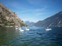 Италия. Озеро Гарда. Seven swans shoot on the Garda lake. Фото Alexey Kokoulin - Depositphotos