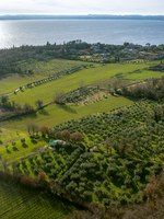 Италия. Озеро Гарда. Coast of garda lake, desencano, italy (olives fields). Фото Alexander Shadrin - Depositphotos