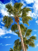 Мальдивы. Maldives. Palm trees on a blue sky. Фото andresr - Depositphotos