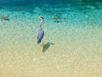 Мальдивы. Shangri-La Villingili Resort & Spa. Bird and baby sharks. Фото Molbert - Depositphotos