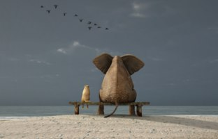 Мечты... Elephant and dog sit on a deserted beach. Фото mike_kiev - Depositphotos