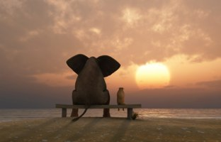 Мечты... Elephant and dog sit on a summer beach. Фото mike_kiev - Depositphotos