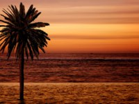 Мальдивы. Beach palm tree at sunset. Фото andresr - Depositphotos