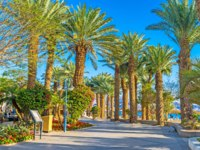 Израиль. Променад Эйлата. The central promenade of Eilat with shady palm gardens and scenic flower beds, Israel. Фото efesenko-Deposit