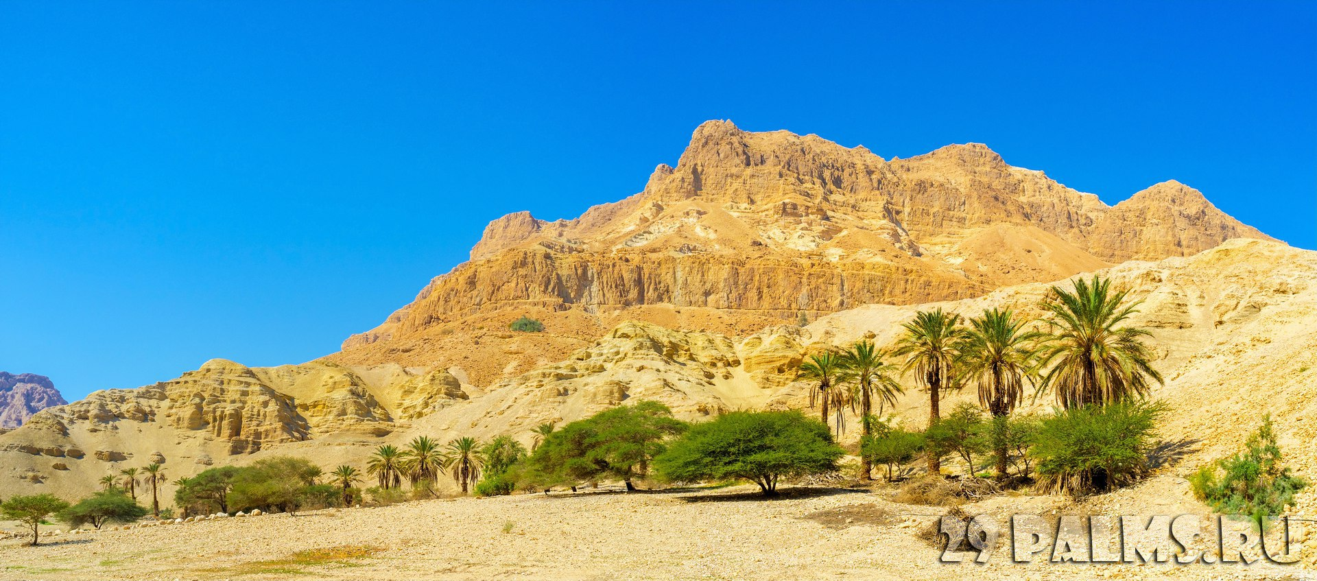 Израиль. Национальный природный парк Эйн-Геди. The Judean Desert is one of the world's smallest, yet most unique desert regions, Ein Gedi Nature Reserve