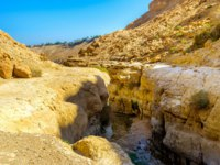 Израиль. Национальный природный парк Эйн-Геди. The mountain river in a narrow crevice in Ein Gedi Nature Reserve, Israel. Фото efesenko-Depositphotos
