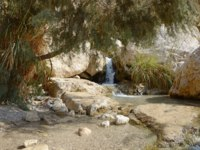 Middle East arabian scenic view. Pure brook flows in beautiful gorge Ein Gedi, in arid Judean desert on shore of Dead Sea near Masada and Qumran Caves. Фото Marinka-D