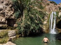 Visitor swim in Ein Gedi spring. It's a very famous and popular oasis on the shore of Israel's Dead Sea, the lowest place on Earth. Фото lucidwaters-Depositphotos