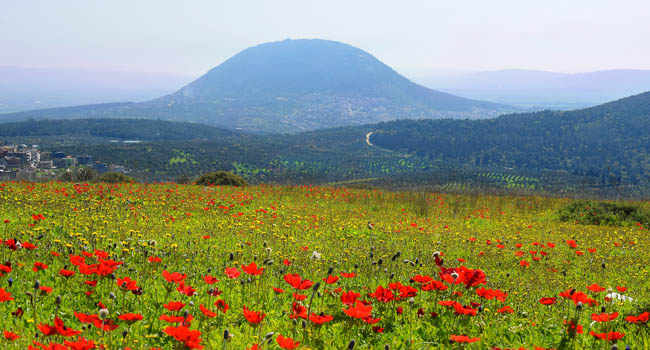 Израиль. Назарет. Spring bloom of poppies in Galilee in the area of Nazareth, Israel. Фото irisphoto11-Depositphotos