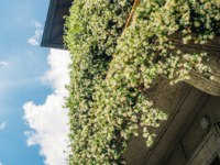 Balcony covered with White Hyacinth 'Carnegie' Hyacinthus flowers which emit a lovely sweet fragrance. Фото Brasilnut - Depositphotos
