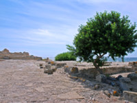 Италия. Сардиния. Пула. Pula in Italy with a olive tree and sea. Фото Filip Fuxa - Depositphotos