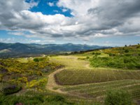 Италия. Сицилия. Катания. Vineyard of the mount Etna in Sicily, italy. Фото javarman - Depositphotos