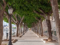 Италия. Сицилия. Сиракузы. Beautiful alley of trees along the street Foro Vittorio Emanuele II on the island of Ortygia in Syracuse, Sicily. Фото Alesinya-Deposit