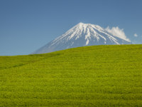 Япония. Гора Фудзияма. Tea farm and Mount Fuji in spring at Shizuoka prefecture. Фото Torsakarin - Depositphotos