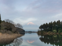 Япония. Гора Фудзияма. Mountain Fuji and Tanuki lake in evening spring season. Фото Torsakarin - Depositphotos