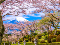Япония. Гора Фудзияма. Gotemba City, Japan at Peace Park with Mt. Fuji in spring season. Фото sepavone - Depositphotos