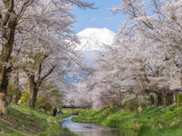Япония. Гора Фудзияма. Sakura tree and Mountain Fuji at Oshino Hakkai in spring season. Фото Torsakarin - Depositphotos