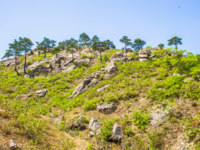 Северная Корея. Алмазные горы. Trees on the surface of the Mount Kumgang. Фото Siempreverde - Depositphotos