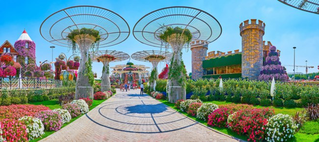 ОАЭ. Дубай. Сад чудес. Panorama of Miracle Garden grounds with scenic flower beds, castle, sunshades and topiary plants in Dubai. Фото efesenko - Depositphotos
