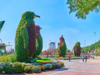 Miracle Garden with large installtions of penguins, covered with living plants and surrounded by sunflowers, petunias and lawn in Dubai. Фото efesenko - Depositphotos