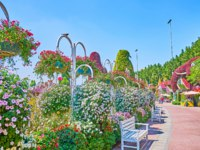 The Miracle Garden is the perfectly landscaped place with lots of floral installations, shady alleys, cozy benches and lush greenery in Dubai. Фото efesenko - Depositphotos