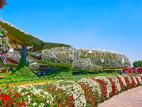 ОАЭ. Дубай. Сад чудес. The Emirates A380 plane on the green lawn among the flowers of Miracle Garden in Dubai. Фото efesenko - Depositphotos