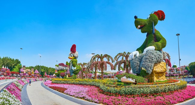 ОАЭ. Дубай. Сад чудес. The scenic alley of Miracle Garden is lined with characters installations of Webby Vanderquack and Goofy in Dubai. Фото efesenko-Depositphotos
