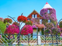 ОАЭ. Дубай. Сад чудес. The small Dutch house, covered with colored flowers in Miracle Garden in Dubai. Фото efesenko - Depositphotos