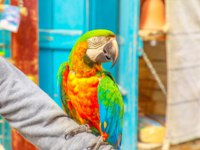 Катар. Доха. A colorful parrot standing on an arm at Bird Souq inside Souq Waqif, the old market tourist attraction in Doha center, Qatar. Фото bennymarty-Depositph