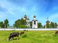 Переславль-Залесский. Cattle in pasture at St. Nicholas Monastery in Pereslavl-Zalessky - Yaroslavl Region, Russia. Фото Leonid_Andronov - Depositphotos