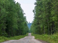 Россия. Соловецкие острова. Road to Sekirnaya mountain on Bolshoy Solovetsky island, Arkhangelsk oblast, Russia. Фото svn48-Depositphotos