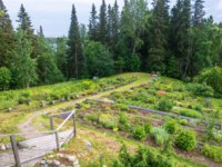 Россия. Соловецкие острова. In the Botanical garden of the Solovetsky Islands on a summer day, Arkhangelsk oblast, Russia. Фото svn48-Depositphotos