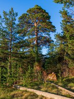 Россия. Карелия. Остров Валаам. The wonderful island Valaam is located on Lake Lodozhskoye, Karelia. Фото GeneralSky-Depositphotos