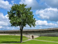Россия. Псковский кремль. Pskov, lonely tree near the wall of Pskov Krom. Фото oroch2 - Depositphotos