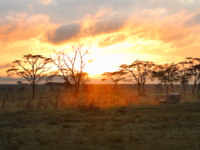 Клуб путешествий Павла Аксенова. Танзания. Morning safari drive. Beautiful sunrise in Serengeti national park, Tanzania. Фото shalamov - Depositphotos
